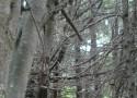 Territorio mapuche web