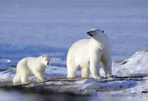 """Ciclo de Encuentro con Científicos charla: """"Cambio climático y sus consecuencias sobre los patrones de distribución geográfica de los animales"""""""