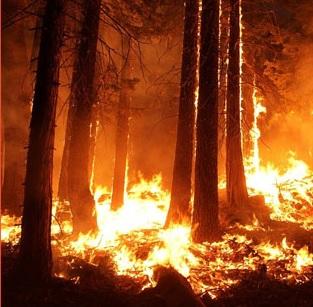 """Taller""""Incendios forestales y nuevo régimen climático:"""