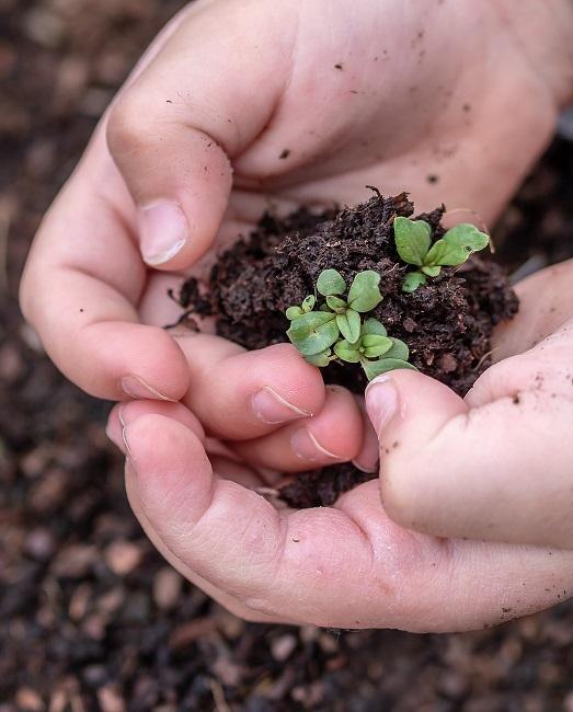 Educación ambiental y la sociedad del Siglo XXI